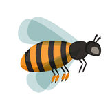 Honey bee vector illustration. European western honey bee, isolated on white honey bee. Honey bee cartoon vector and honey bee yellow insect. Honey bee nature Royalty Free Stock Photography