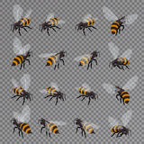 Honey bee vector set on a transparent background. Flat 3d vector isometric illustration. Honey natural healthy food Stock Photos
