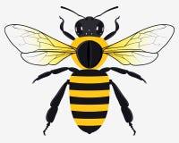 Honey Bee Vetora Illustration detalhado ilustração stock