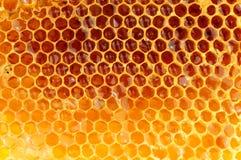 Honey Bee Wax Honeycomb Stockfoto