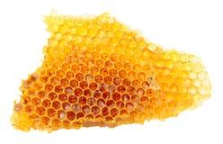 Honey Bee Wax Honeycomb Fotos de archivo libres de regalías
