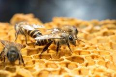 Honey Bee y colmena en Tailandia Foto de archivo