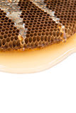 Honey beehive on white background. Close-up honey beehive on white background Royalty Free Stock Photo