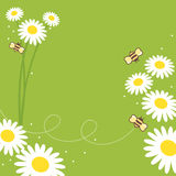 Honey Bees. Collect flowers for the honey bee Royalty Free Stock Photo