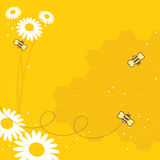 Honey Bees. Collect flowers for the honey bee Stock Photo