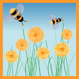 Honey bees royalty free stock photo