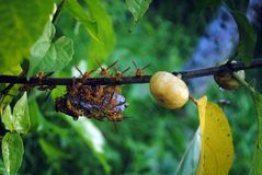 Honey Bees fotografia stock