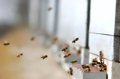 Honey Bees Imagen de archivo