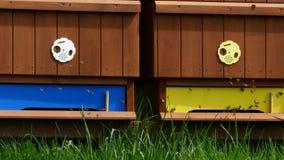 Honey Bees stock videobeelden