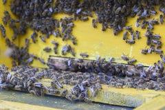 Honey Bees Foto de Stock Royalty Free