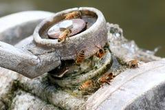 Honey Bees Stock Foto's