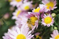 Honey Bees Stockfoto