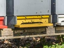Honey Bees Foto de archivo libre de regalías