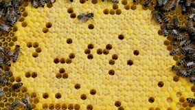 Honey bees in a bee hive. stock footage