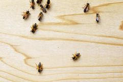 Honey bees on a beehive. Closeup Royalty Free Stock Photos