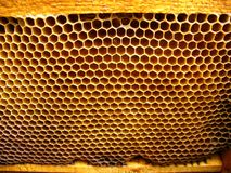 Honey bees cells Royalty Free Stock Photography