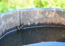 Honey Bees Drinking Water from Rural Wooden Bucket Royalty Free Stock Image