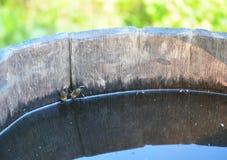 Honey Bees Drinking Water van Landelijke Houten Emmer royalty-vrije stock afbeelding