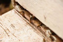 Honey Bees en colmena del país Imagen de archivo libre de regalías