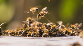 Honey Bees Fighting With Aliens. Time lapse. Shot of swarm of bees fighting with aliens. Time lapse shot stock video