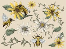 Honey bees and flowers elements Royalty Free Stock Images