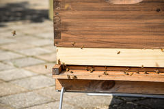 Honey bees flying around wood frame hive on city rooftop Royalty Free Stock Photos