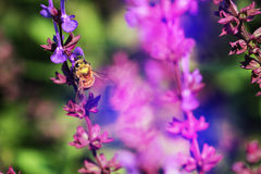 Honey bees. The bees in the garden of flowers all the time honey Royalty Free Stock Photography