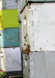 Honey bees on hive Stock Images
