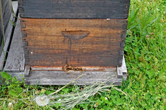 Honey bees and hive Stock Photo