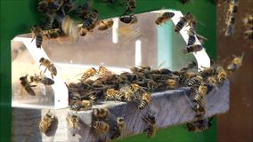 Honey bees on hive stock video footage