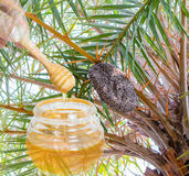 Honey bees hive swarm. Royalty Free Stock Photography
