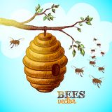 Honey bees and hive on tree branch background. Vector illustration stock illustration