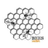 Honey bees and honeycomb royalty free illustration