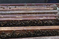 Honey bees and how to care in Vietnam.  stock photo