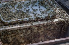 Honey bees and how to care in Vietnam.  royalty free stock photos