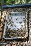 Honey bees and how to care in Vietnam.  stock photography