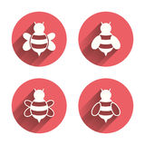 Honey bees icons. Bumblebees symbols Stock Images