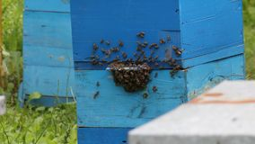 Honey bees infront of beehive Royalty Free Stock Photo