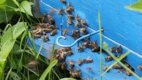 Honey bees infront of beehive Stock Photo