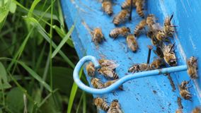 Honey bees infront of beehive Stock Photos
