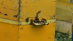 Honey bees infront of beehive Royalty Free Stock Image