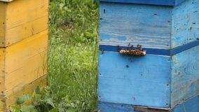 Honey bees infront of beehive Royalty Free Stock Images