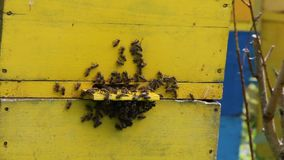 Honey bees infront of beehive Stock Image