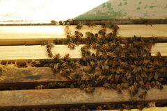 Honey bees kept in a bee box producing fresh honey. Honey bees kept in a bee box hive on a private farm working making honey on a farm in rural Australia stock photo