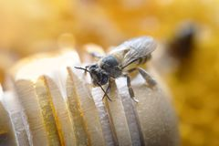 Honey Bees och Honey Stick på bikupa royaltyfri foto