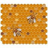 Honey Bees på honungskakan, vektorillustration royaltyfri illustrationer