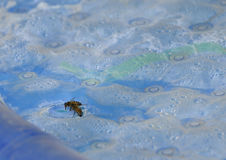 Honeybees Stock Images