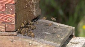 Honey Bees Slow Motion 4K UHD filme