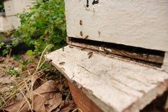 Honey Bees sur la ruche de pays Photographie stock libre de droits