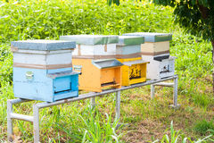 Honey bees swarming and flying around their beehive Royalty Free Stock Photography